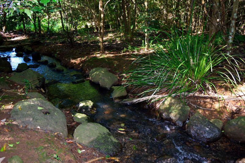 Creek.med